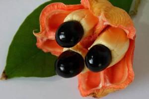фрукт Аки