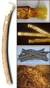 древние зубные щетки