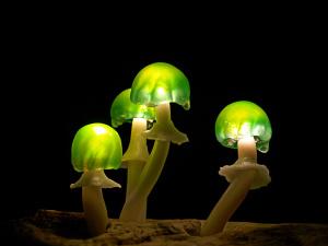 грибы_22