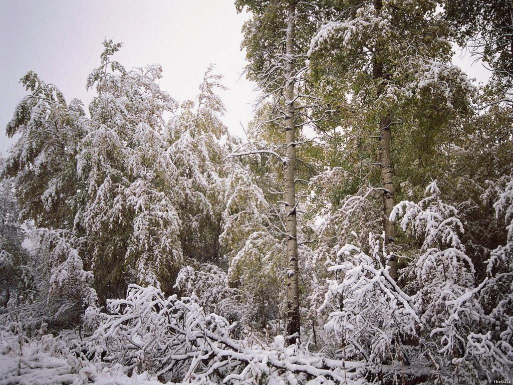зима лес сказка