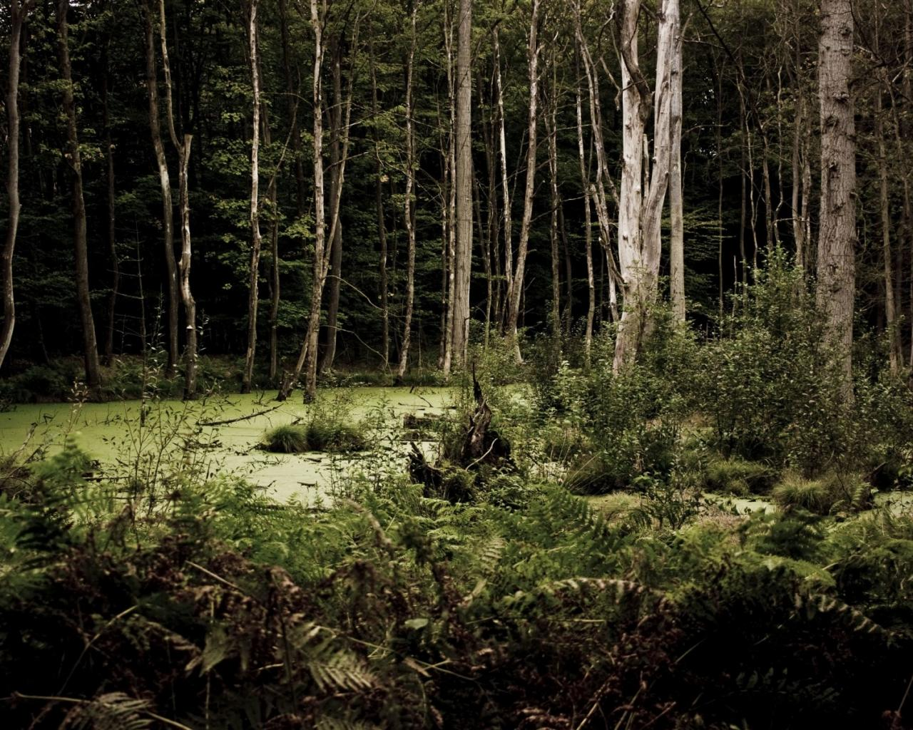 лес болото