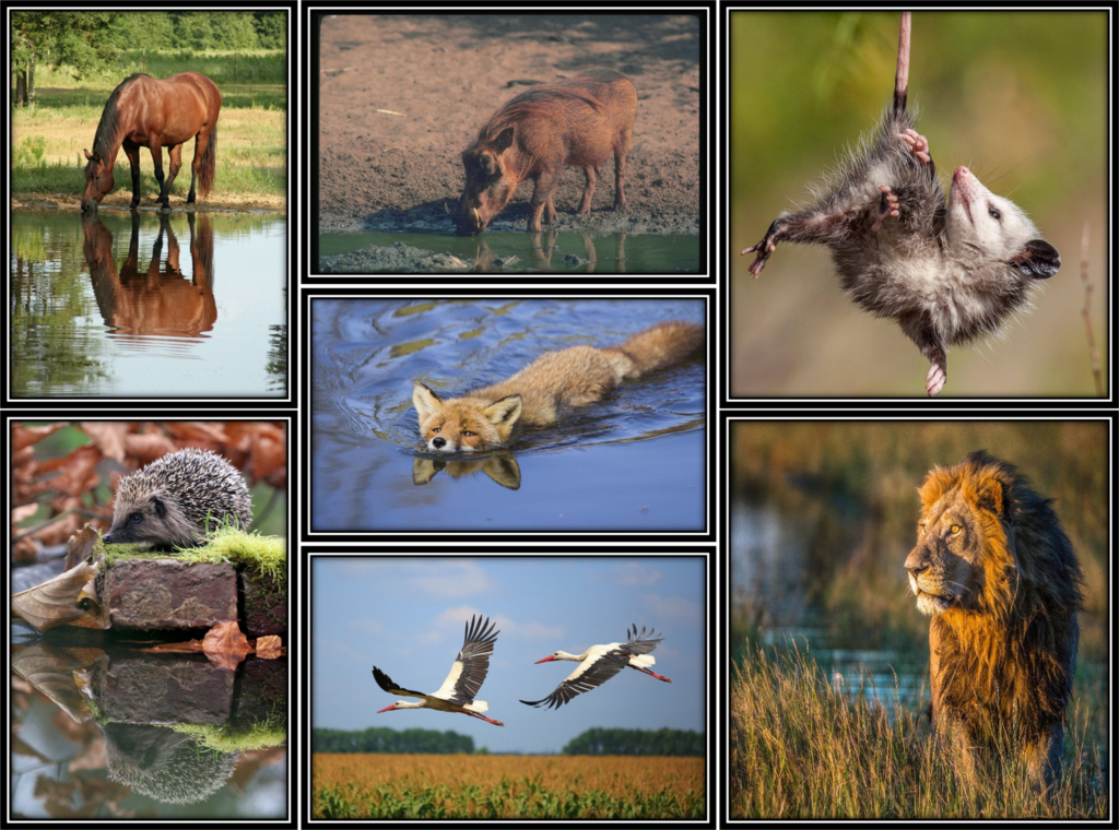басни про животных